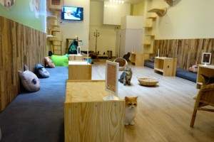 Cat Café in Singapur Katzen